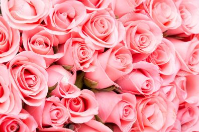 39501756-pink-rose-flower-bouquet-background-Stock-Photo-roses.jpg